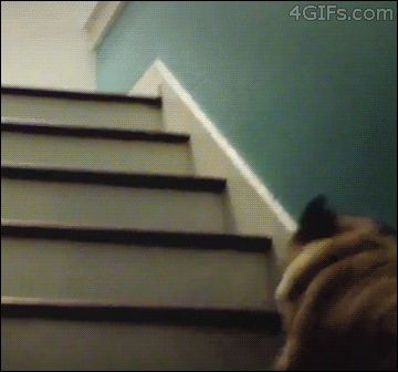 They jump up the stairs like tiny balls of lumpy cotton candy.