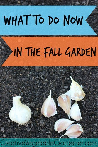 25 best ideas about fall vegetable gardening on pinterest fall planting vegetables gardening - Fall gardening tasks ...