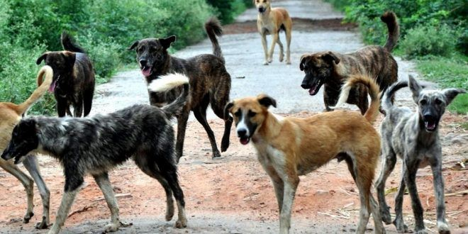 Recently, the Blue Cross of Hyderabad in collaboration with Greater Hyderabad Municipal Corporation (GHMC) launched an Animal Birth Control programme in Hyderabad.Read full story at dogexpress.in