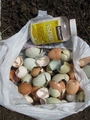 When planting tomatoes, put a couple crushed aspirin along with eggshells under plants.