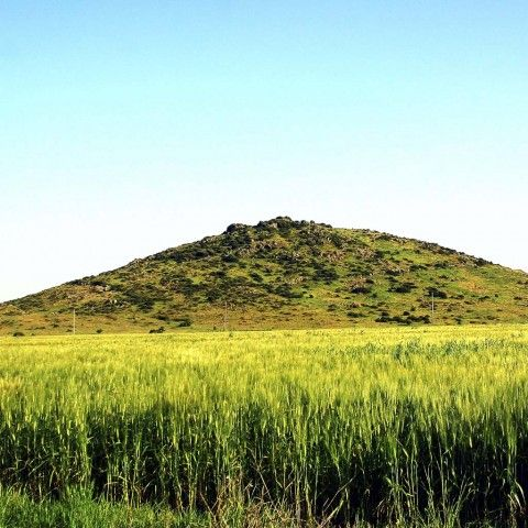 La rivincita dei grani antichi