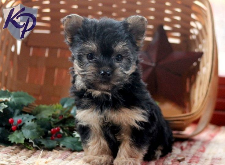 Puppy Finder: Find & Buy a Dog today by using our ...