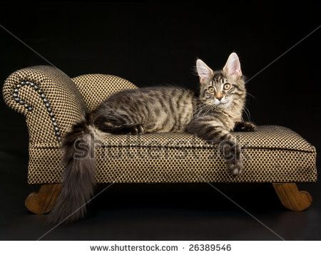 Cat chaise lounge cats and other animals pinterest for Cat chaise longue