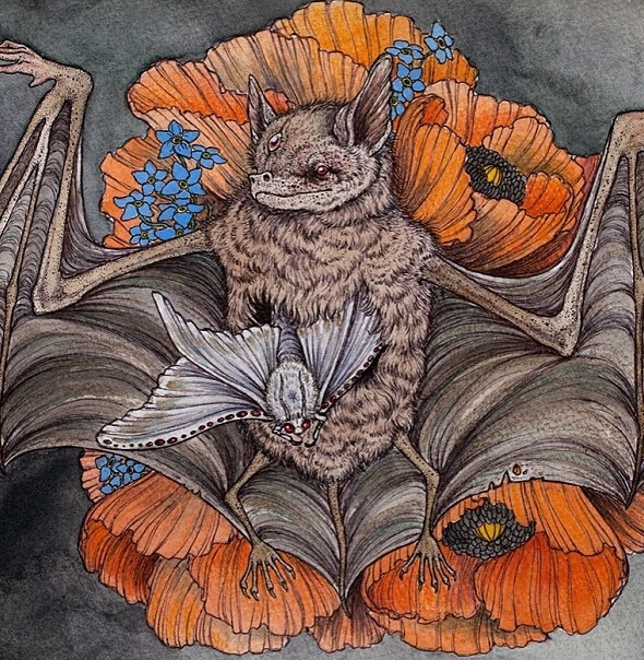 Chiroptera by Caitlin Hackett (detail)