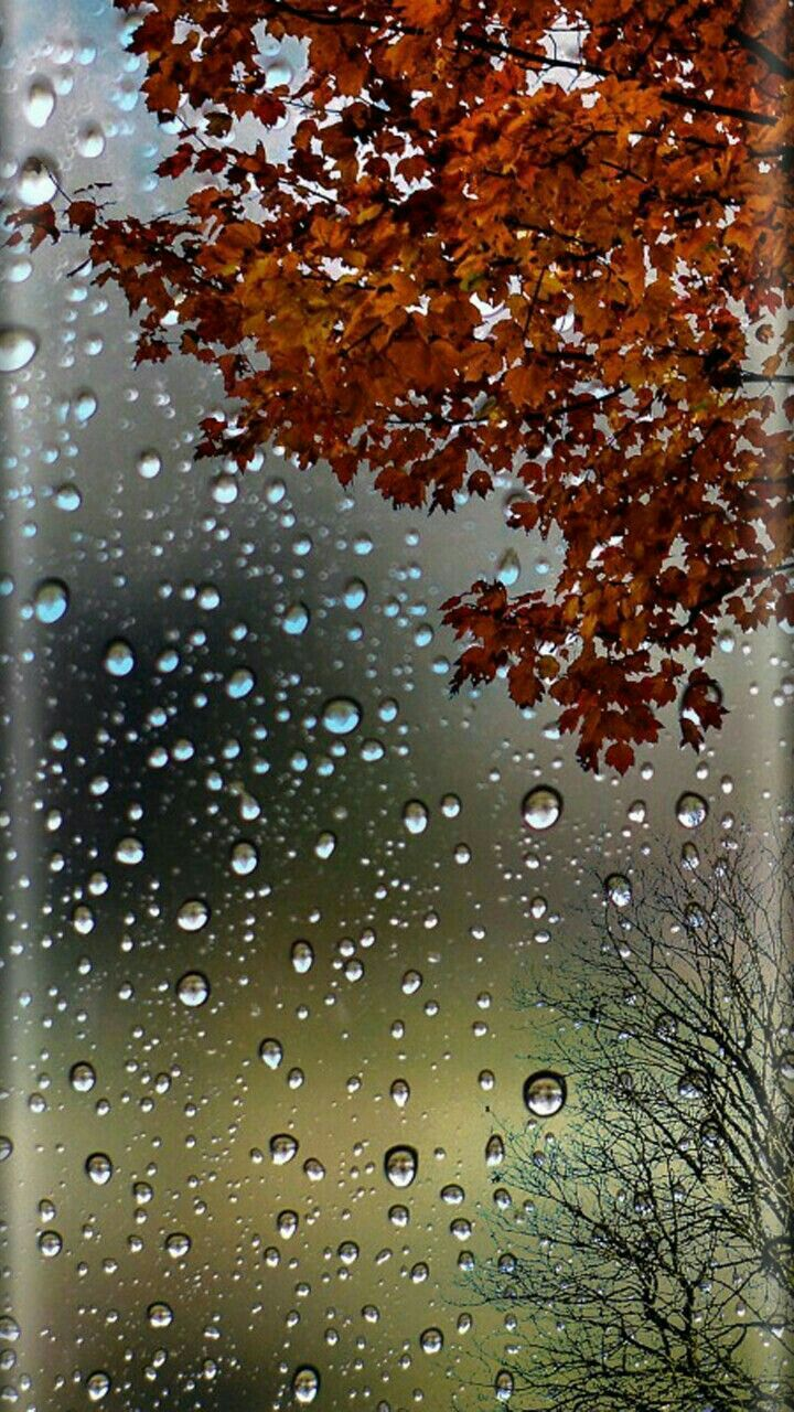 Red Tree Raindrops Wallpaper Rain wallpapers, Fall