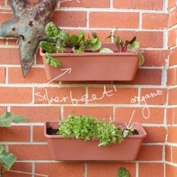 Grow your own vertical vegetable garden and maximize your garden space.