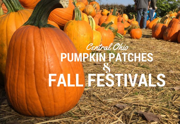 Central Ohio Pumpkin Patches and Fall Festivals | What Should We Do Today?