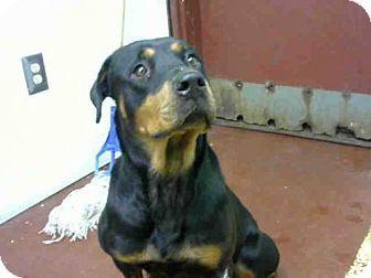 10/09/16 SL~~~Atlanta, GA - Rottweiler. Meet NALA, a dog for adoption. http://www.adoptapet.com/pet/16683733-atlanta-georgia-rottweiler
