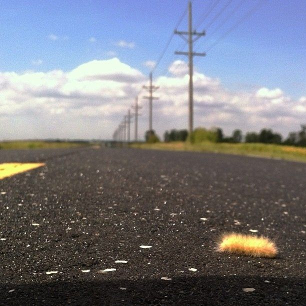 """""""Hitchhiking is hard.""""   17 Fuzzy Caterpillars Who Just Want To Be Loved"""