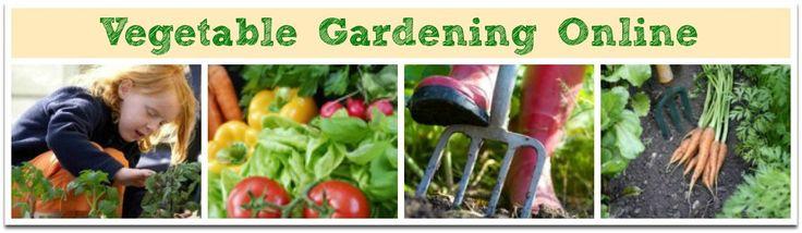 Best 25 indoor vegetable gardening ideas on pinterest for Indoor vegetable gardening beginner