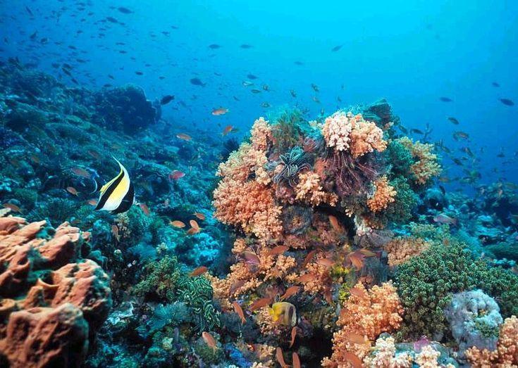 Baru Island, Coral reefs