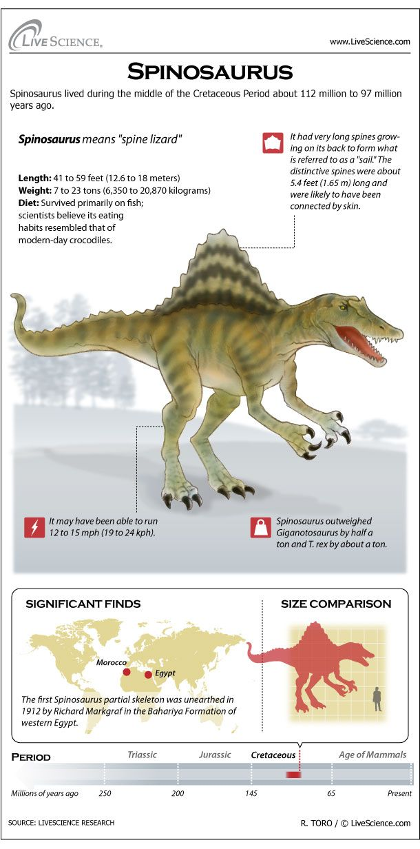 197 Best Images About Dinosauricon S Spinosauridae Family On Pinterest Morocco Sharks And L