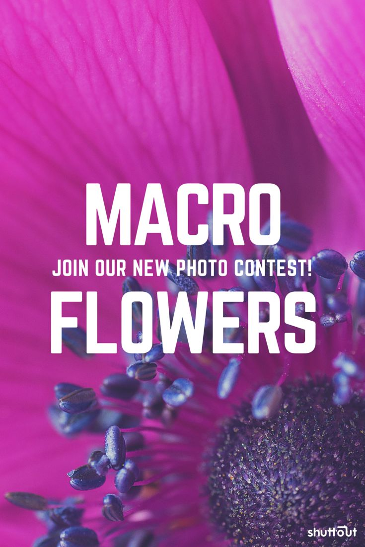 Are you a #macro #photographer? Check out our #photo #contest & upload your best picture!  #flowers #macro #photography #contests #competition
