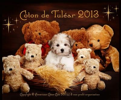 2013 Coton de Tulear Calendar. Products for