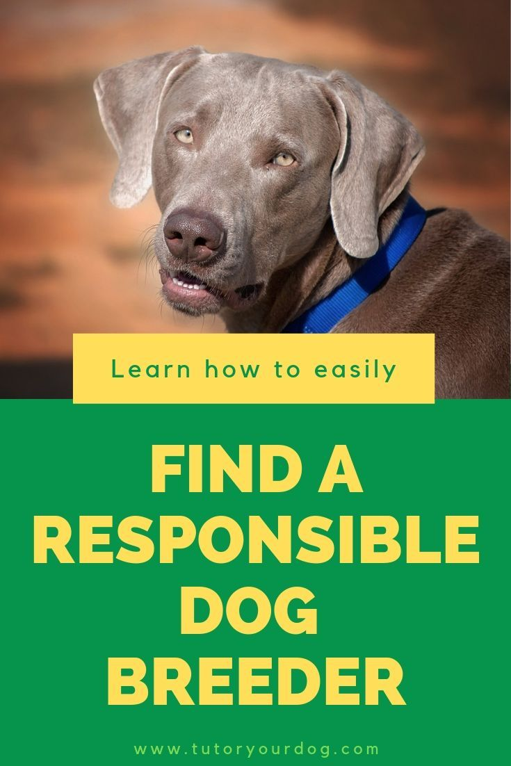 Secrets To Finding A Responsible Dog Breeder Dogs Online Dog