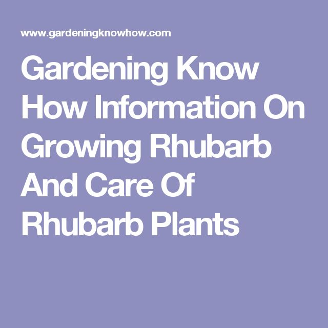 Gardening Know How Information On Growing Rhubarb And Care Of Rhubarb Plants