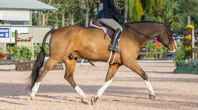 Training Your Horse To Stretch Their Neck At Trot In A Hunter Under Saddle Class