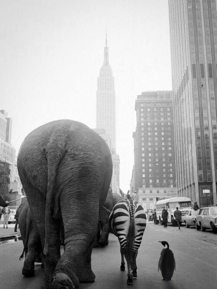 Otto Bettmann:NYC. Noah's Ark crew strolling through the streets of Manhattan, 1968.