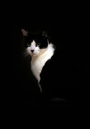 Tuxedo cat by PictureGirl via Pixdaus ~ heart nose