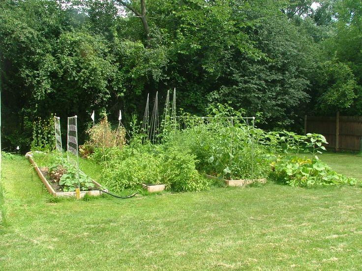 Vegetable Garden: Gardening 101, Gardening Stuff, Gardens, Vegetables Garden, Fresh Vegetables, Raised Garden