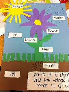 After weather we dove right into plants. In first grade, the kids need to learn the parts of the plant and be able to describe the life cycle of a plant. A great activity for all learning levels. Lots of great pics and directions at:  http://teacherkimbo.blogspot.com/2011/08/plants-mania.html