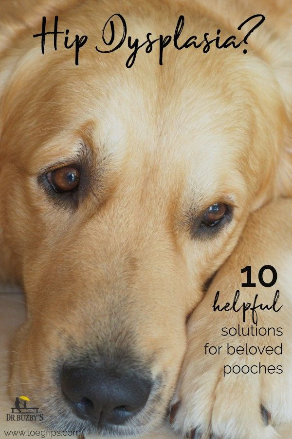Helpful Medicine For Hip Dysplasia In Dogs 10 Tips For Treating