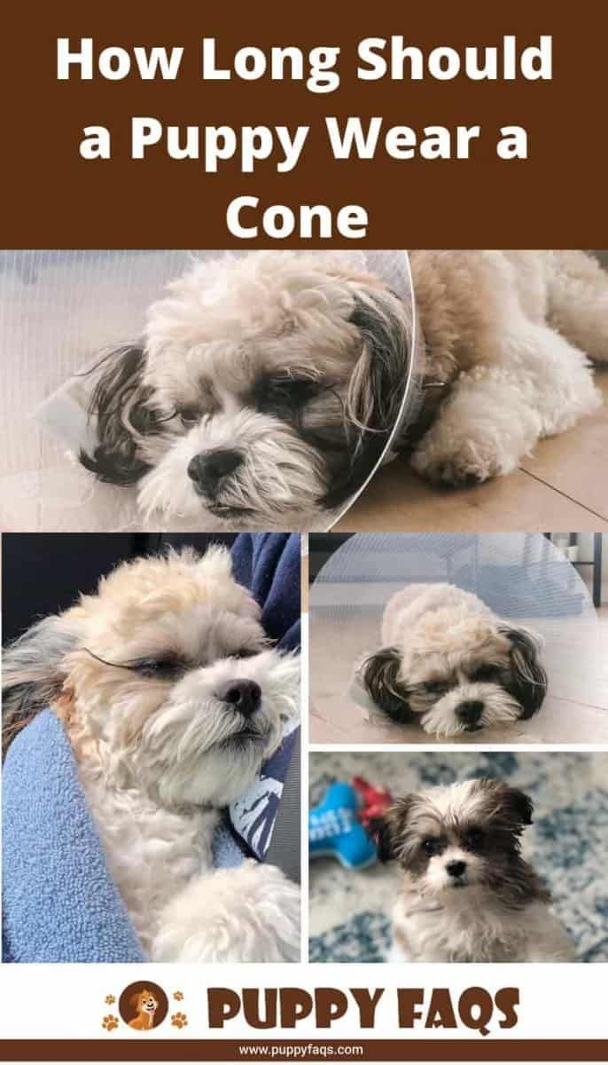 Before And After Pictures Of Dog Neutering