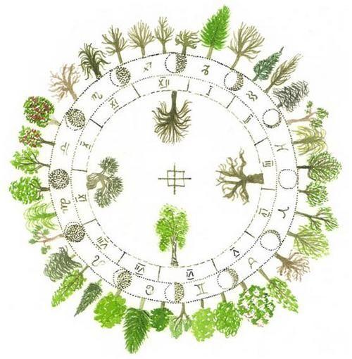 oroscopo-celtico-alberi