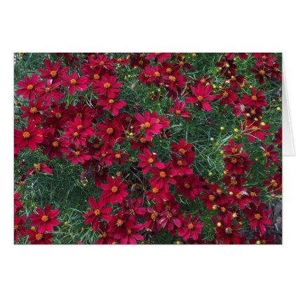 #Red Coreopsis 71 Wedding Congratulations Card - #wedding #love #couple