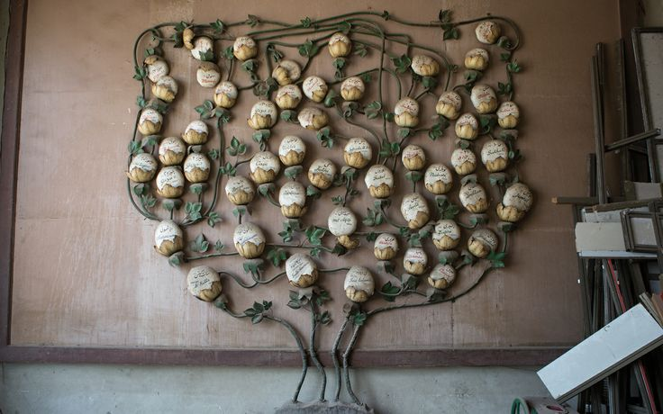 The Cotton Museum of Cairo - The Botany of Cotton Types of cotton.
