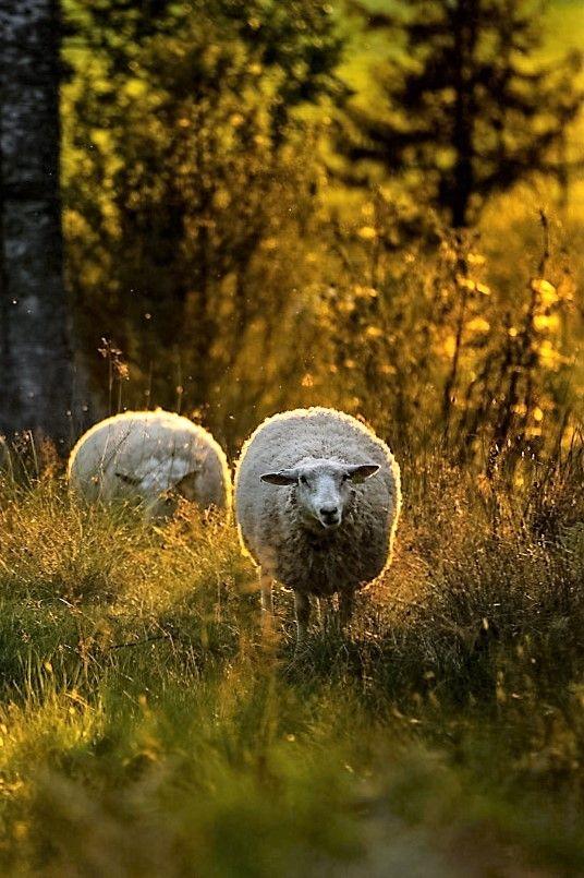 Feens Country Living : Die 416 besten Bilder zu Animals :3 auf Pinterest  Tiere ...