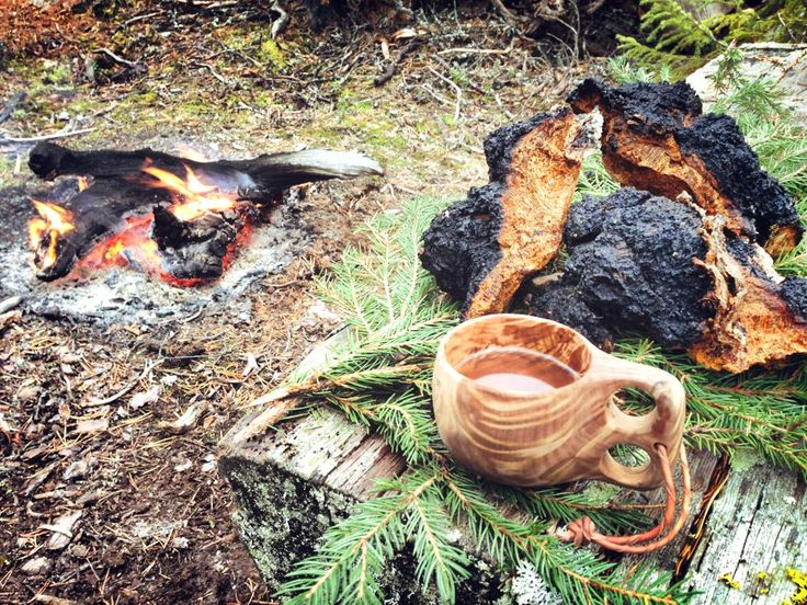 #Chaga – The King of #Mushrooms