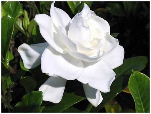 Chaque Fleur a une Signification. Voici le Guide du Langage des Fleurs.