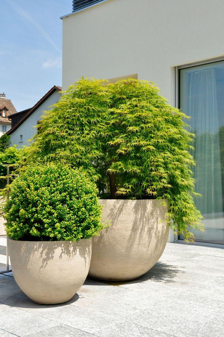 Acer palmatum - Japanischer Fächerahorn in Ateliervierkant Pflanzgefäss - PARC'S gartengestaltung.ch