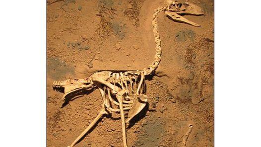 Hallan en Mar del Plata los restos de un ave del terror prehistórica