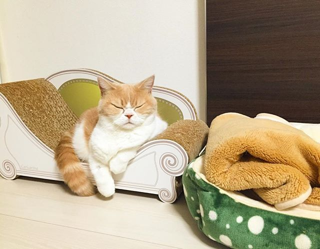 Meet Japanese Grumpy Cat Who Is Even Grumpier Than The Original - Meet the japanese cat that might just be the grumpiest kitty ever