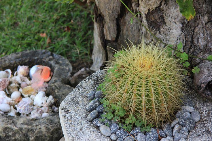 Garden Succulent by Charissa Lotter (de Scande)