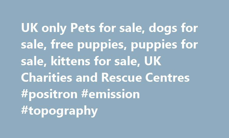 UK only Pets for sale, dogs for sale, free puppies, puppies for sale, kittens for sale, UK Charities and Rescue Centres #positron #emission #topography http://pet.remmont.com/uk-only-pets-for-sale-dogs-for-sale-free-puppies-puppies-for-sale-kittens-for-sale-uk-charities-and-rescue-centres-positron-emission-topography/  UK Pet Advert website with classified pets for sale and free adverts BellaUK.com established since 1999, we are proud to be one of the most popular UK Pet related website's on…