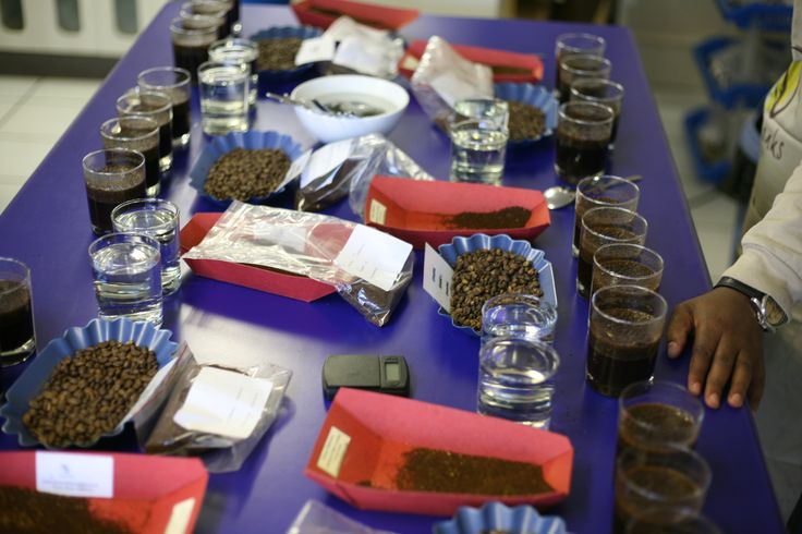 Coffee cupping layout