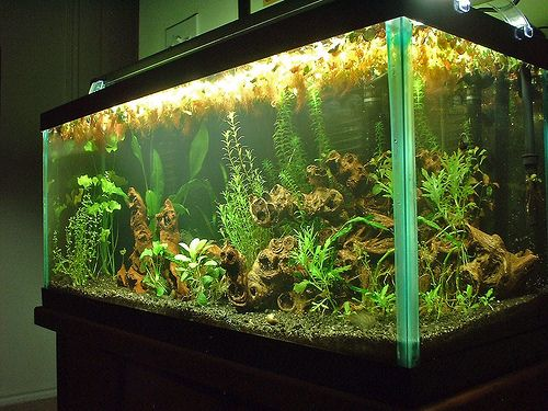 Best 25 30 Gallon Fish Tank Ideas On Pinterest Fish