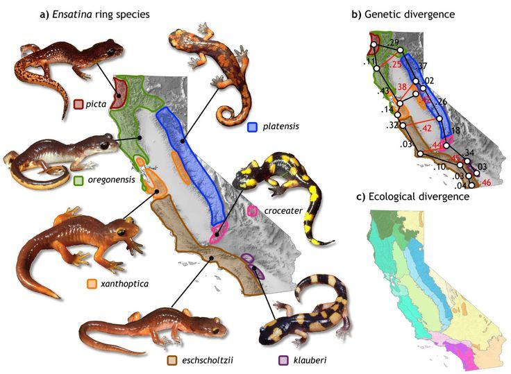 70 Best Evolution Speciation Images On Pinterest Ap Biology