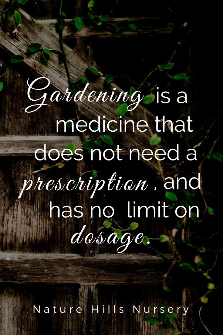 Gardening One Of The Best Mood Boosters There Is Gardening Quotes Garden Quotes Vegetable Garden Planner Small Vegetable Gardens