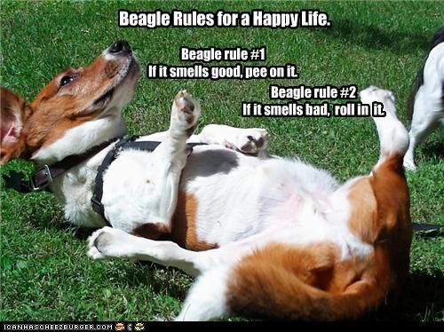 I think these are the rules for all dogs!