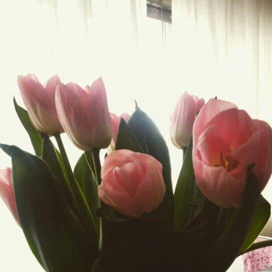 #flowerpower #douceur #printemps #tulipe
