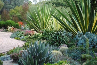 Beautiful San Diego Succulent Garden by Frank Mitzel and Randie Laurie