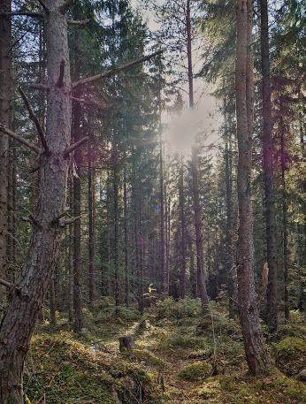 Suomalaisia valokuvaajia – Jäsenten Blogit – Yhteisö – Google+