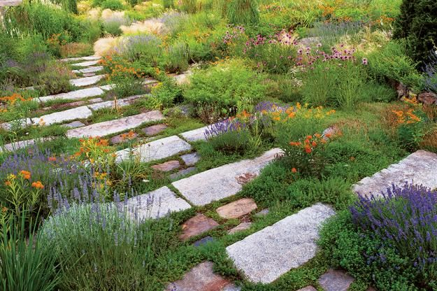 Gardeners added sand and gravel to the native clay and created a journey down and through a sun-loving medley of perennials, grasses, and herbs. In June, varieties of lavender, thyme, and the Mexican feather grass Nassella tenuissima provide plant structure.