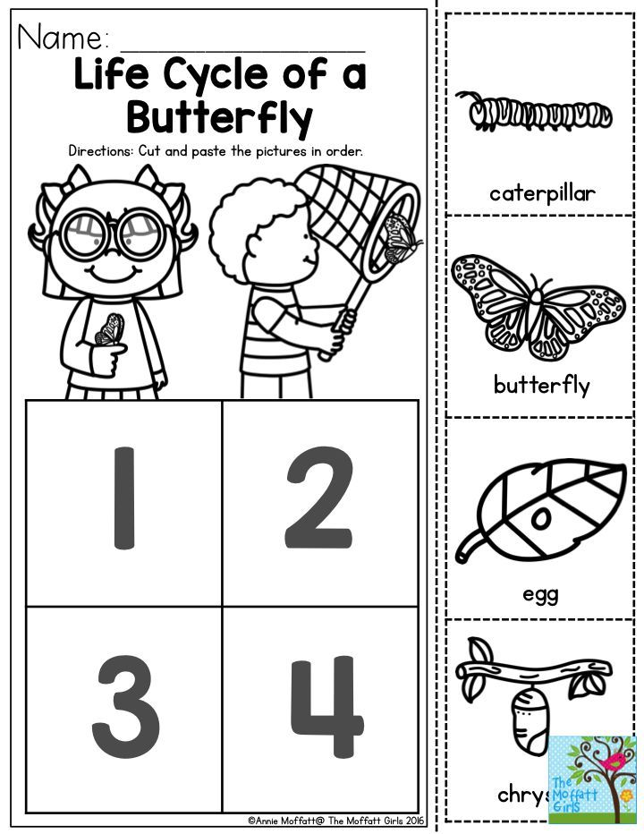 Free butterfly life cycle worksheet cut and paste