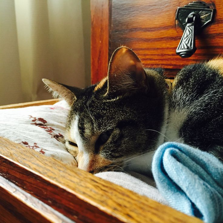 Nap time in the scarf drawer