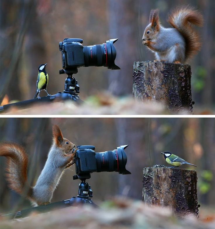 (6) Some Russian photographer captures the cutest squirrel photo session ever - Imgur